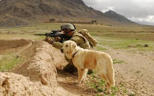 Animals_Dogs_Faithful_dog_028020_.jpg