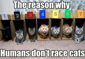 funny-pictures-cats-racing