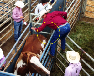 ... picture, you can see the wire used on the horse by the rodeo handler