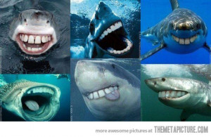 Funny photos funny sharks with teeth