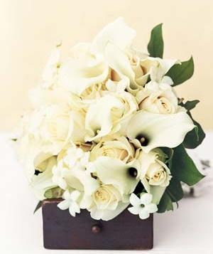 white-flowers_300.jpg?itok=TvI-5aE5