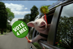 GEICO's Maxwell the Pig is on the campaign trail to become advertising ...