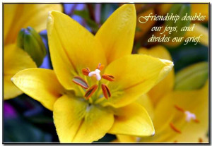 Beautiful Flower With Friendship Quote