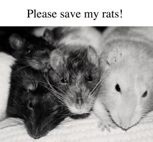 animals sick help pets rats Signal Boost rat
