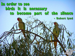 birds quotes quotations bird quote bird quotes and sayings bird quotes ...