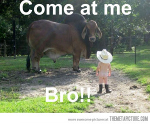 Funny photos funny baby cowboy hat cow