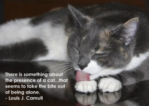 Some people say that cats are sneaky, evil and cruel. True, and they ...