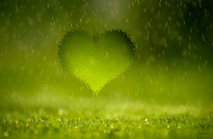 rain on green grass Rainy Quotations and Wallpapers
