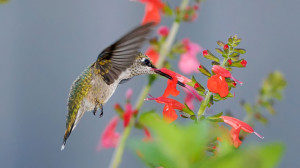 Hummingbirds…life is rich, beauty is everywhere, every personal ...