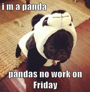 ... on Friday… Happy Friday Everyone! #Dogs #Friday #Funny #Panda #Puppy