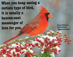 Quotes about birds I love