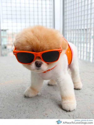 boo:sportin' my new shades from lucy. human looked ridonculous in ...