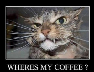 somebody give this cat some coffee quick dennys funny quotes funny ...