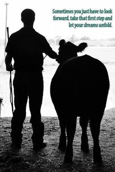 quotes shows cattle quotes livestock shows quotes stockshow quotes ...
