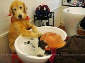 Funny Dog Beauty Salon Funny Picture