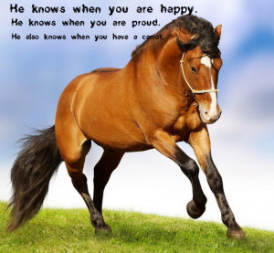 Sweet Horse Saying by Showjumper330