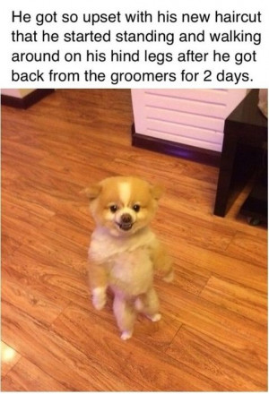 funny-picture-bad-hair-cut-dog.jpg