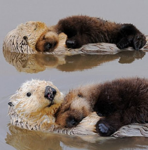love otters and they love each other too. *
