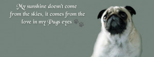 For Your Timeline. Pug QuotesFunny Pets, Animal Lovers, Pugs Eye ...