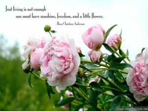 Quotes About Flowers And Happiness Flowers and happiness quotes