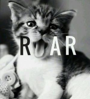 cute kitten, ROAR