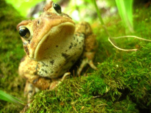 Reads 39 You Have To Kiss A Lot Of Frogs Before You Find Your Prince