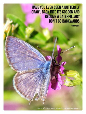 ... Quote #Inspirational #motivational #life #butterfly #lesson #journey #