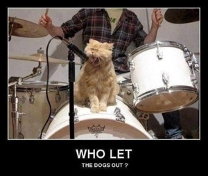 Some cats with the music and drums – funny cat