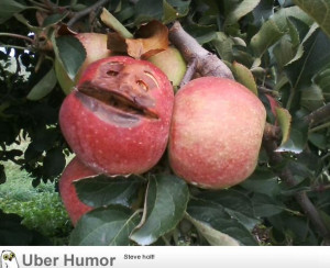 was picking apples in the orchard when suddenly….