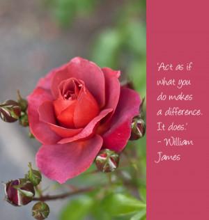 Pearls-of-Wisdom-Images-Rose-Flowerona.jpg#wisdom%20sayings%20500x527