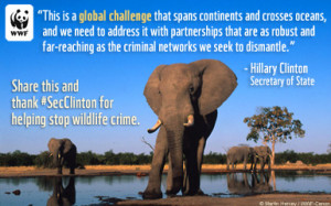 Thank Secretary of State Clinton for helping to stop wildlife crime.