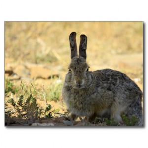 bunny angry bunny rabbit angry bunny rabbit angry bunny rabbit