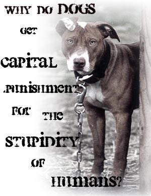 Against Animal Testing Graphics