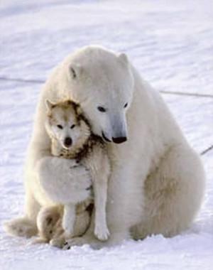 bear-hug-10090026380.jpeg