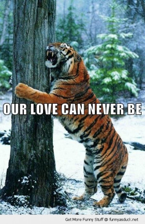love can never be tiger hugging tree animal forest snow funny pics ...