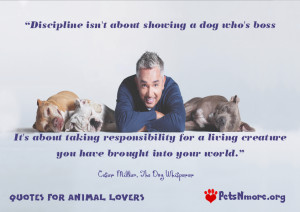 of dogs we love them all in our pet blogs the funny dog and cat quotes