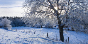 WINTER-WONDERLAND-SCENES-facebook.jpg