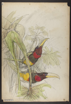 Home John Gould The Family