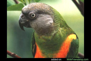 Your Parrot Adorable Funny Pictures Quotes Videos