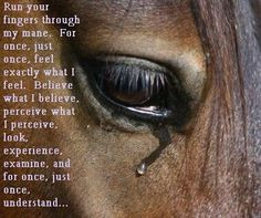 Horses truly are very sensitive creatures - we have to learn to listen ...