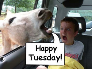 Happy Tuesday Funny Quotes Horse: happy tuesday