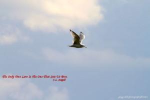 jonathan+livingston+seagull+quotes | jonathan livingston seagull story ...