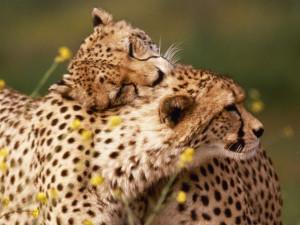Cute Wild Animal
