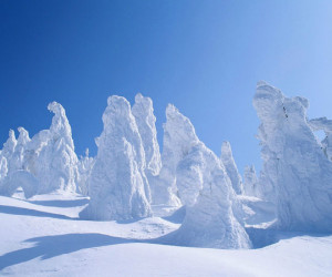 Funny photos funny frozen trees Sweden