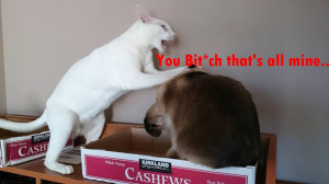 Funny Pet Cats Captions on Instagram!