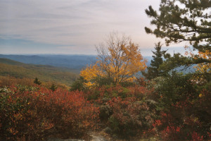 Last fall the Great Smoky Mountains Bookfair sponsored a Poetry ...