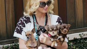 Paris Hilton (@ParisHilton) February 25, 2013