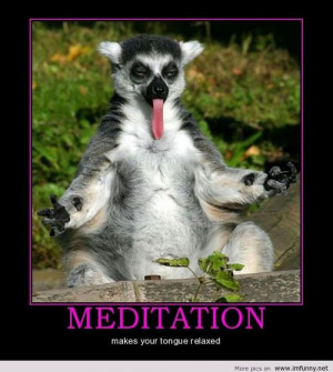 Funny animal – Meditation | Funny Pictures, Funny Quotes – Photos