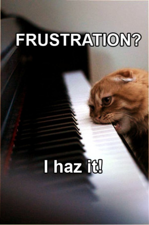 Frustration Cat - I Haz It Reviewed by Black on Friday, June 24, 2011 ...