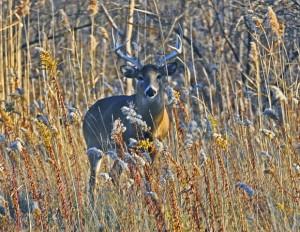 Mammalian adaptations to the stresses of winter generallytake on three ...